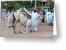 Camel Riders Greeting Card