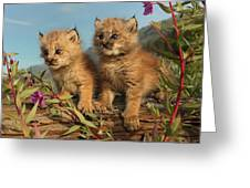Canadian Lynx Kittens, Alaska Greeting Card