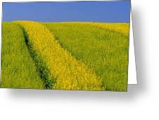Canola Field, Darlington, Prince Edward Greeting Card