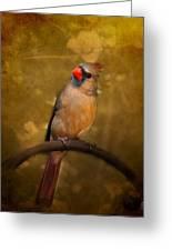 Cardinal II Greeting Card