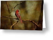 Cardinal IIi Greeting Card