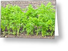 Carrot Crop Greeting Card