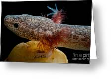 Cascades Caverns Salamander Greeting Card
