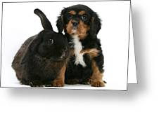 Cavalier King Charles Spaniel And Rabbit Greeting Card
