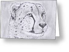 Cheeta Watching Greeting Card