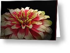 Cherry Vanilla Greeting Card