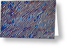 Cholesteric Liquid Crystals  Greeting Card