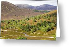 Cleared Scots Pine Forest Greeting Card