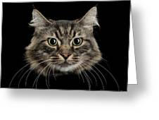 Close Up Of Cats Face Greeting Card