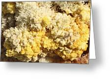 Close-up Of Yellow Salt Crystals Greeting Card