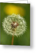 Close View Of A Dandelion Gone To Seed Greeting Card