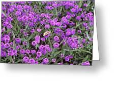 Coarse Verbena (verbena Rigida) Greeting Card