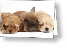 Cockerpoo Puppies And Rabbit Greeting Card