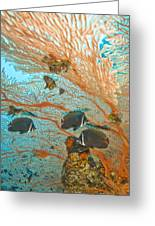 Collare Butterflyfish Greeting Card