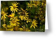 Colorado Sunflower Grouping Greeting Card