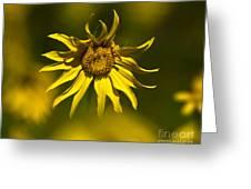 Colorado Sunflowers Greeting Card