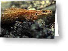Common Lizard Greeting Card