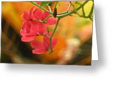 Coral Bush Greeting Card