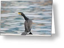 Cormorant Bird Greeting Card