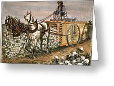 Cotton Harvester, 1886 Greeting Card