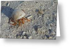 Crabby Times Greeting Card