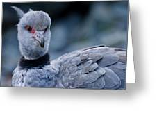 Crested Screamer Greeting Card