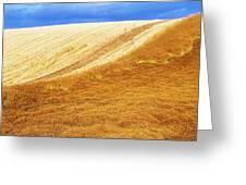 Crops, Oil Seed Rape Greeting Card