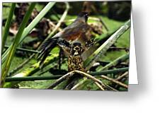 Cry Of The American Robin. Greeting Card