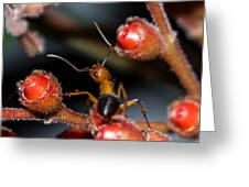 Curious Ant Greeting Card