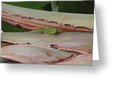 Curious Gecko Greeting Card