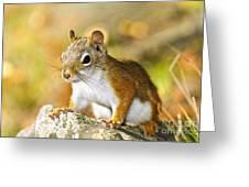 Cute Red Squirrel Closeup Greeting Card