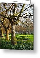 Daffodils In St. James's Park Greeting Card by Elena Elisseeva