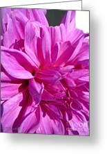 Dahlia Named Lilac Time Greeting Card