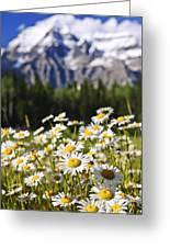 Daisies At Mount Robson Provincial Park Greeting Card
