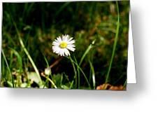Daisy Daisy Greeting Card by Isabella F Abbie Shores FRSA