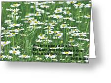 Daisy Fresh Greeting Card