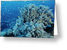 Damselfish Shoal Greeting Card