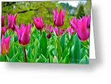 Dancing Tulips Greeting Card