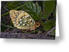 Dark Green Fritillary Butterfly Greeting Card
