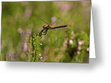 Darter 1 Greeting Card