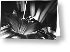 Day Lily Tippecanoe County Indiana Greeting Card
