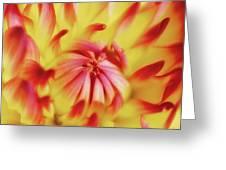 Dayglo Dahlia Greeting Card