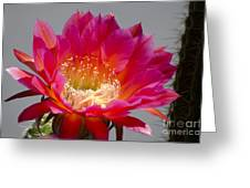 Deep Pink Cactus Flower Greeting Card