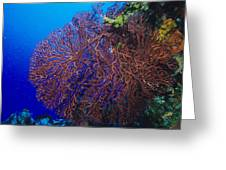 Deep Water Sea Fan Greeting Card