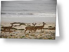 Deer On Beach Greeting Card