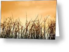 Desert Grass Greeting Card
