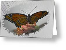 Designer Butterfly Collection Greeting Card