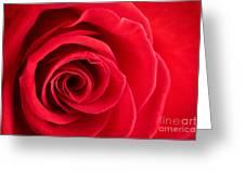 Detail Of Red Rose Greeting Card