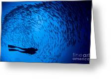 Diver And A Large School Of Bigeye Greeting Card