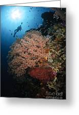 Diver Over Soft Coral Seascape Greeting Card